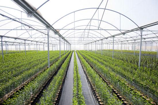 viveros alcanar viveros agricolas y forestales p ginas